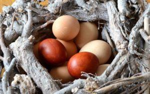 Eierkocher 2